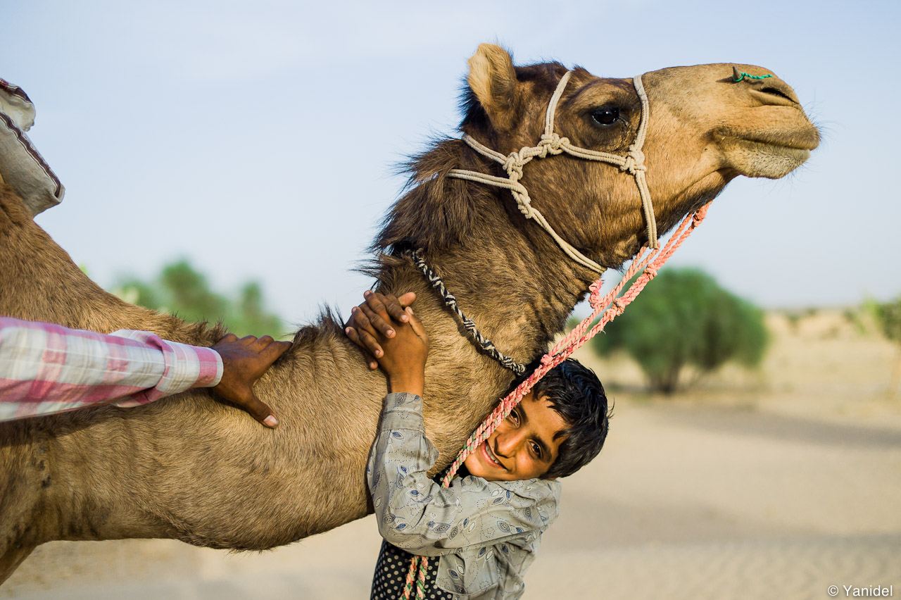 The camel and the kid