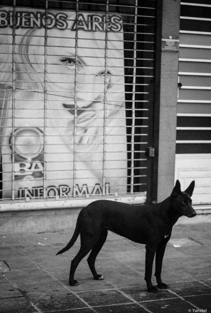 Buenos Aires window III Yanidel